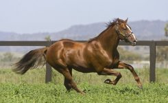 Group One Sire Husson Relocates to Aquis Farm