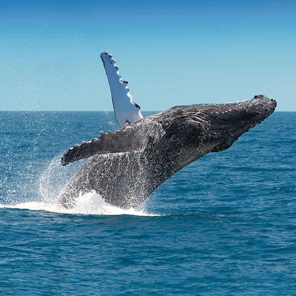 whalesq